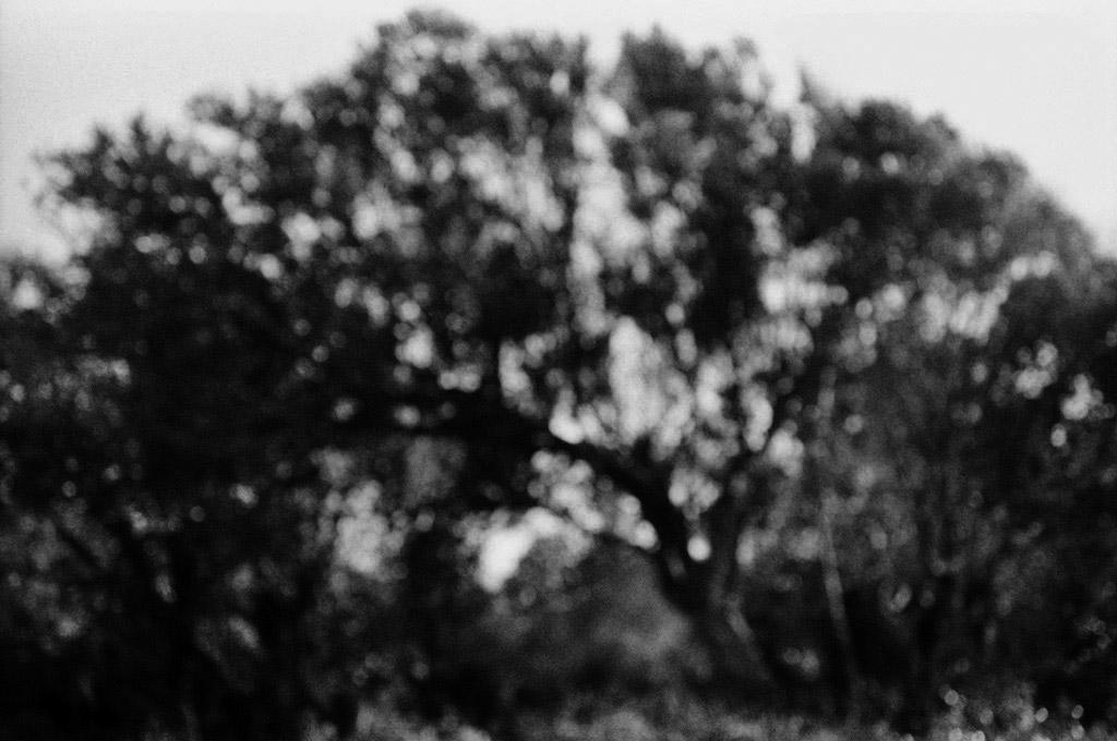 11-Bancarillu-arbre-PS