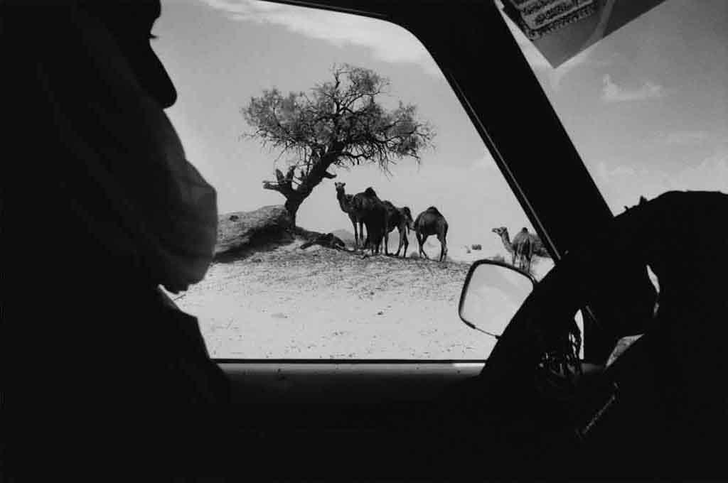 Abdelkader est un Touareg qui a choisi de vivre une vie sédentaire à Djanet. Il possède des chameaux laissés en liberté dans le désert, car la richesse d'un Touareg est encore estimé par le nombre de ses chameaux. Une ou deux fois par an, Abdelkader vient passer quelques jours dans l'Oued Essendilène pour retrouver ses chameaux et marquer au fer rouge les nouveaux-nés. D'autres Touaregs l'embauchent pour faire ce travail à leur place aussi. Tassili n'Ajjers, Sahara algérien, 1997