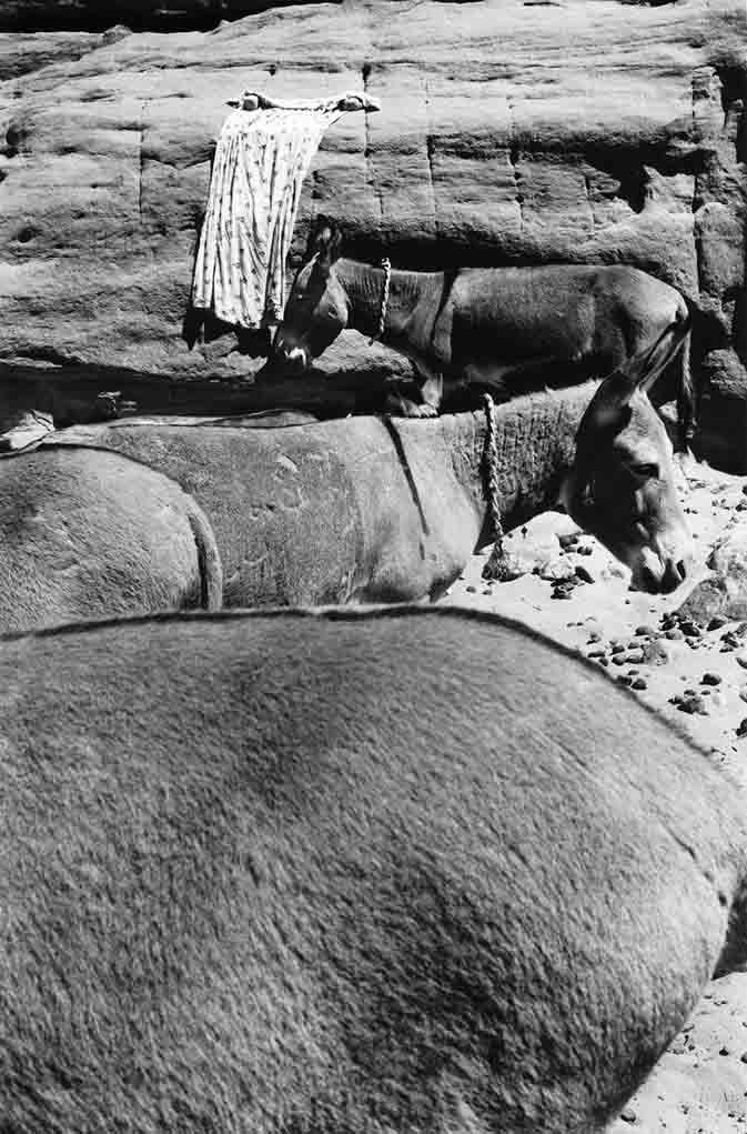 Les ânes sont utilisés pour transporter les bidons et outres d'eau pour le campement. L'eau peut être à une demi-journée de marche parfois. C'est le cas pour la guelta Tuya où les femmes du campement semi-nomade de l'Oued Elt vont chercher l'eau. Elles en profitent aussi pour faire la lessive et se laver. Tassili n'Ajjers, 1997